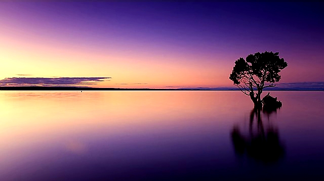 Photo description Image is of a sunset over water and there is a silhouette of a tree