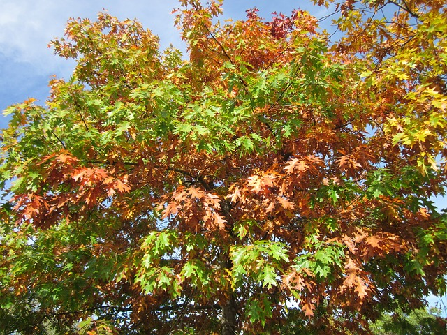 Photo shows a group of red leaves